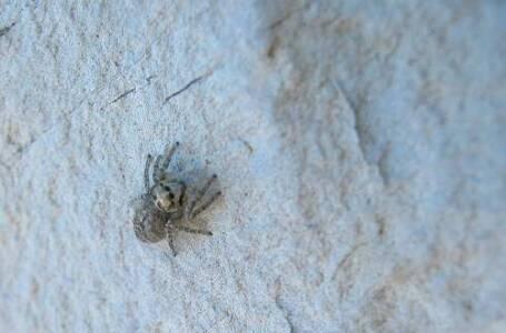 nuova specie di ragno