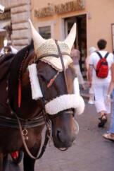 Rissa tra vetturini e animalisti 162x242 - Roma: rissa tra animalisti e vetturini
