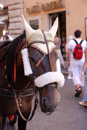 Rissa tra vetturini e animalisti - Roma: rissa tra animalisti e vetturini