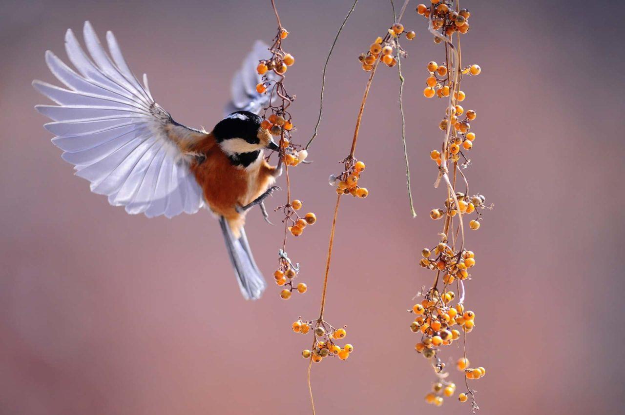 Birdwatching 1 scaled - Birdwatching: il Perù ospita i migliori ornitologi del mondo