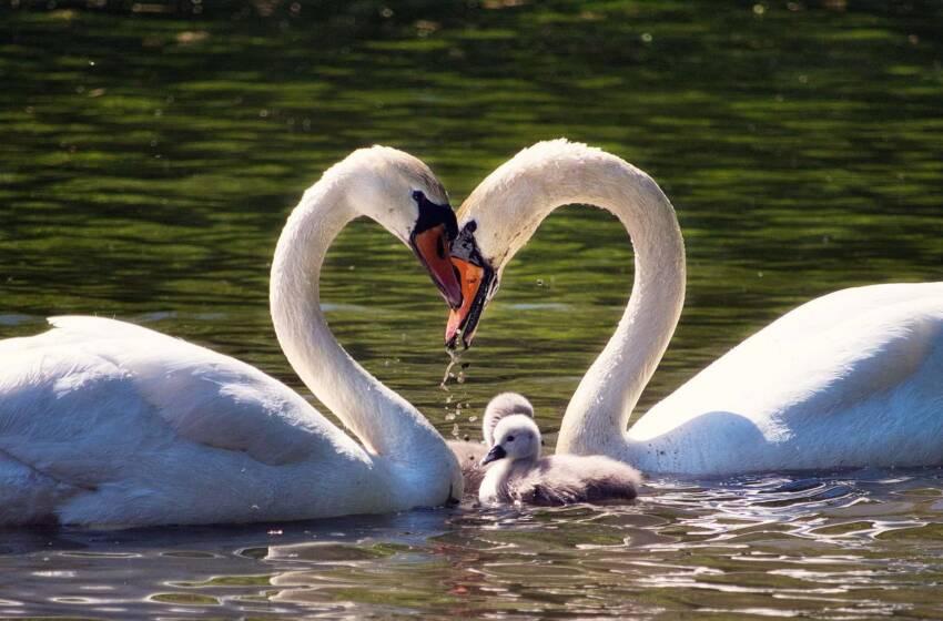 Alla ricerca dell'amore eterno