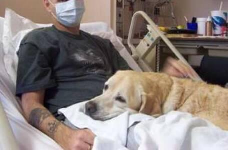 Animali domestici iAnimali domestici in ospedalein Emilia Romagna si puòspedalein Emilia Romagna si può