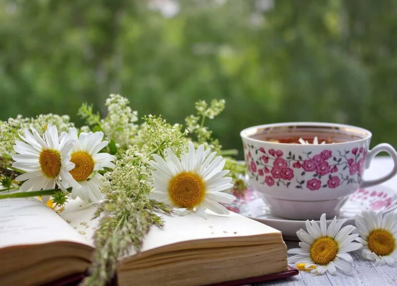 camomilla libro fiori tazza tisana 800x577 - Il cuore selvatico del ginepro di Vanessa Roggeri, il libro, la recensione