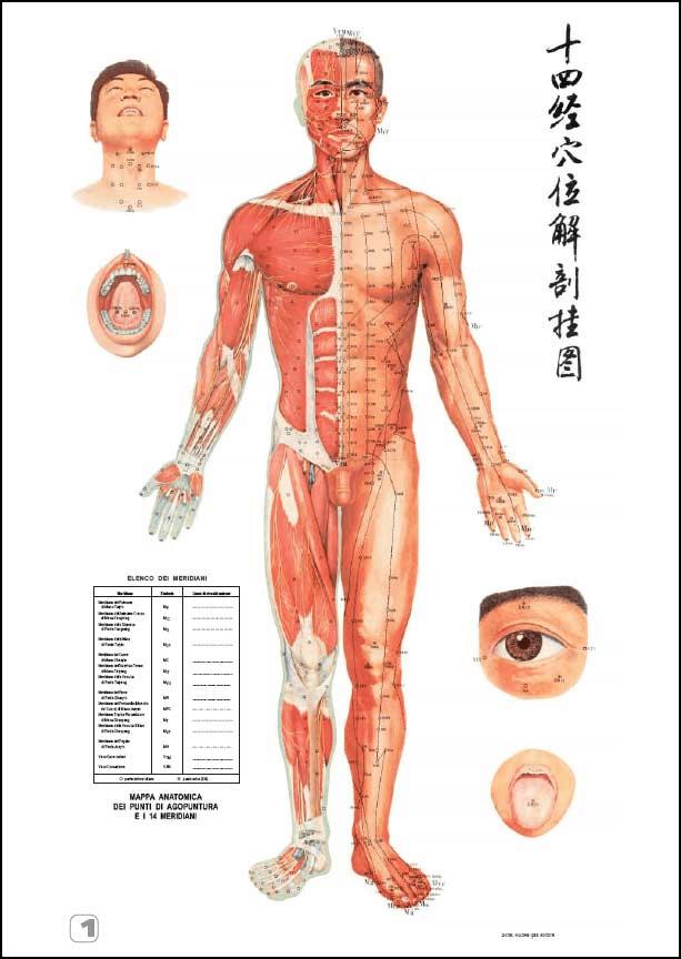 meridiani agopuntura - Agopuntura: una cura alternativa per molte patologie