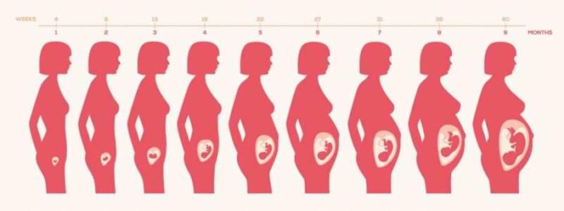 calcolo settimane di gravidanza 2 800x300 - Calcolo settimane di gravidanza: il metodo migliore