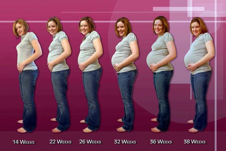 calcolo settimane di gravidanza 3 - Calcolo settimane di gravidanza: il metodo migliore