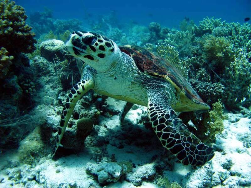 diving gallery 04 800x600 - Marsa Alam perchè sceglierla per le vacanze, sole, immersioni e natura in Egitto