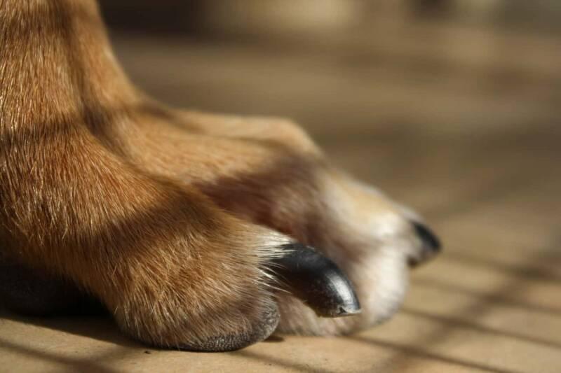curare unghie del cane 800x533 - Come prendersi cura del proprio cane, consigli utili