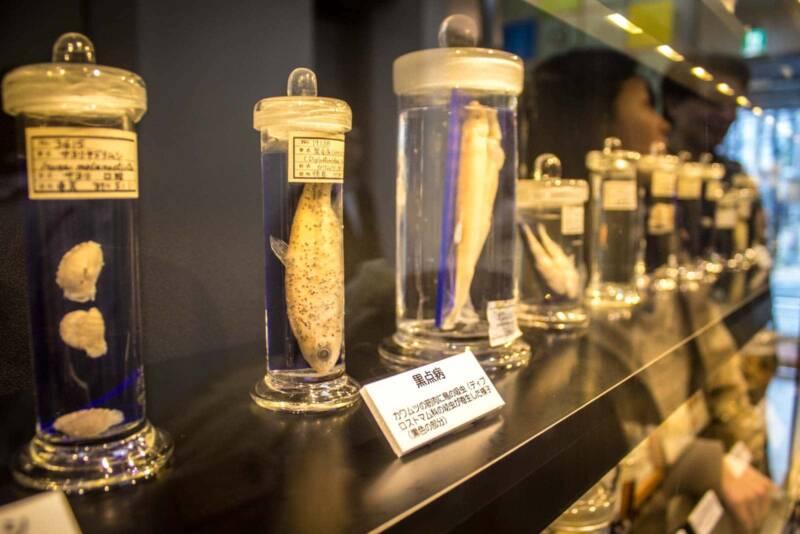 meguro parasite museum 800x534 - Musei strani: i più curiosi di tutto il mondo
