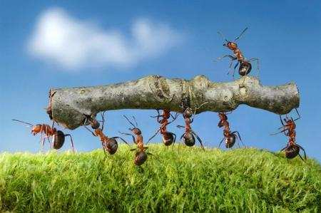 Come allontanare le formiche