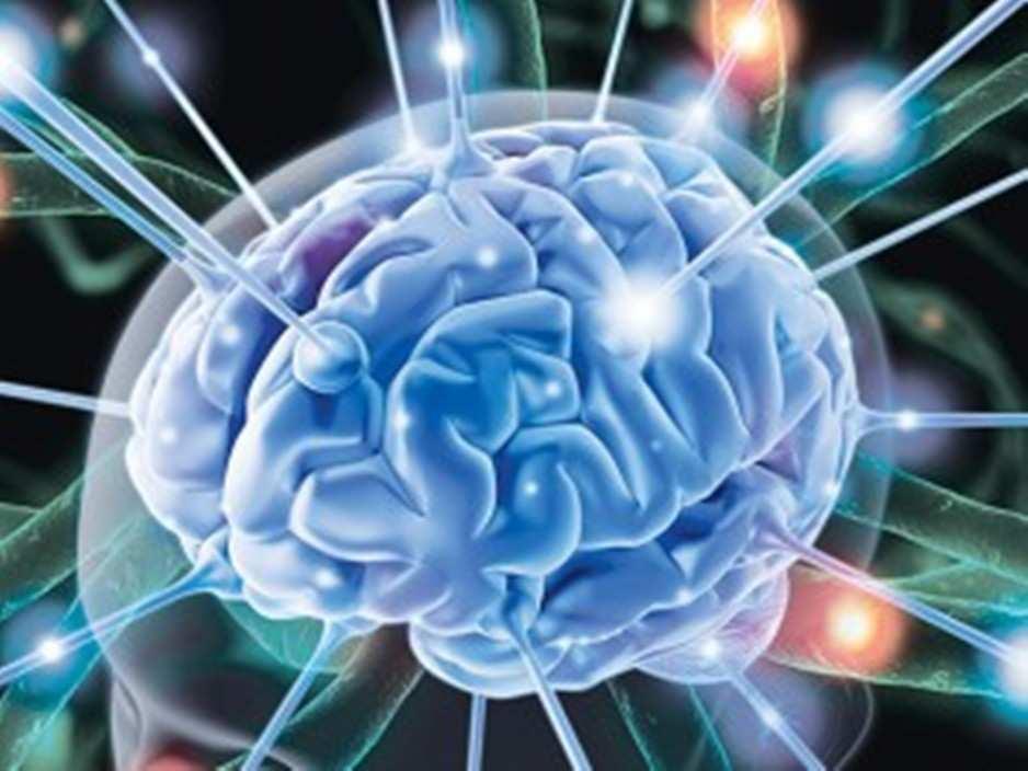 Salute: Creato in laboratorio il cervello in 3D