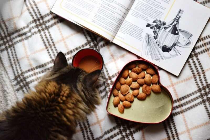 libro cucina 800x533 - I biscotti di Baudelaire di Alice B. Toklas