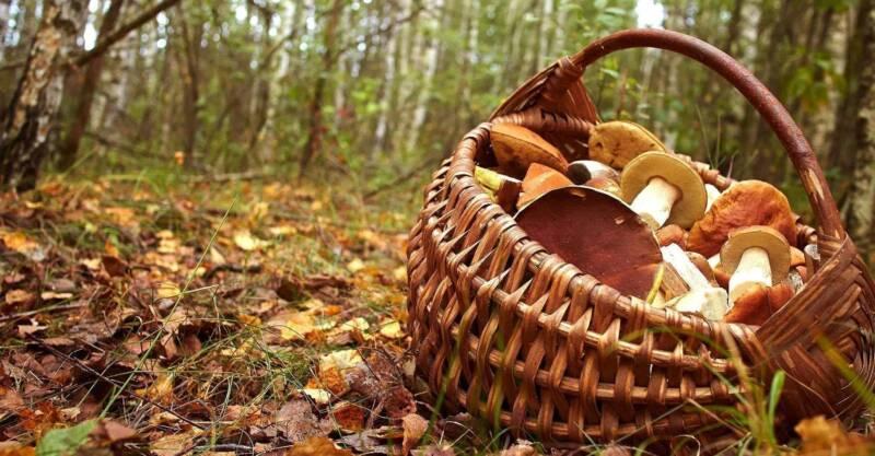 periodo raccolta dei funghi 800x417 - Funghi: trucchi e segreti del periodo di raccolta