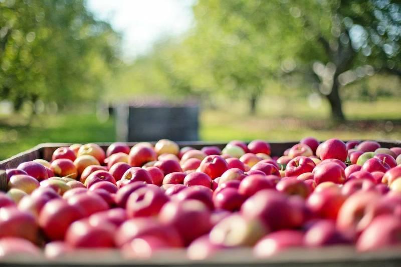 mele frutta di stagione autunnale 800x533 - Frutta di stagione: Autunno, Perchè consumare la frutta di stagione????