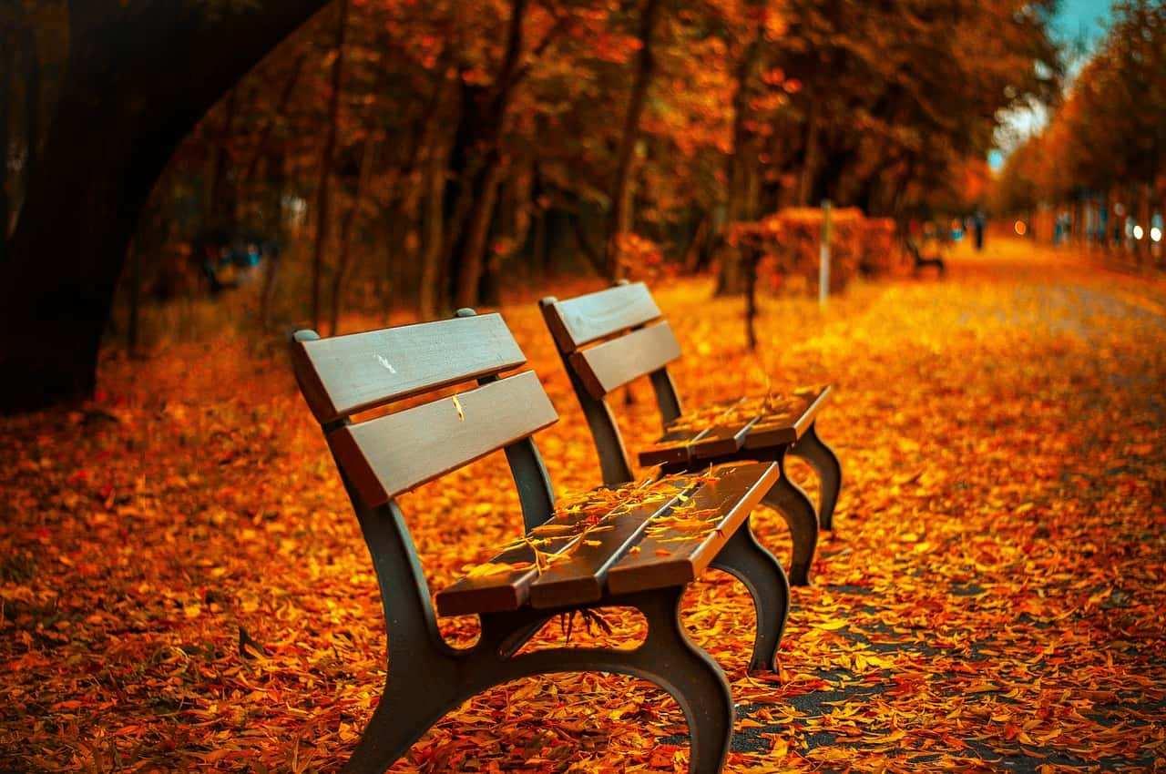 cosa fare in autunno a new york 3 - Cosa fare in autunno a New York? il top delle vacanze