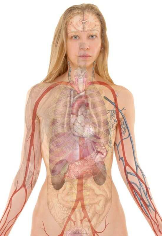 curiosita sul corpo umano 550x800 - Curiosità sul corpo umano