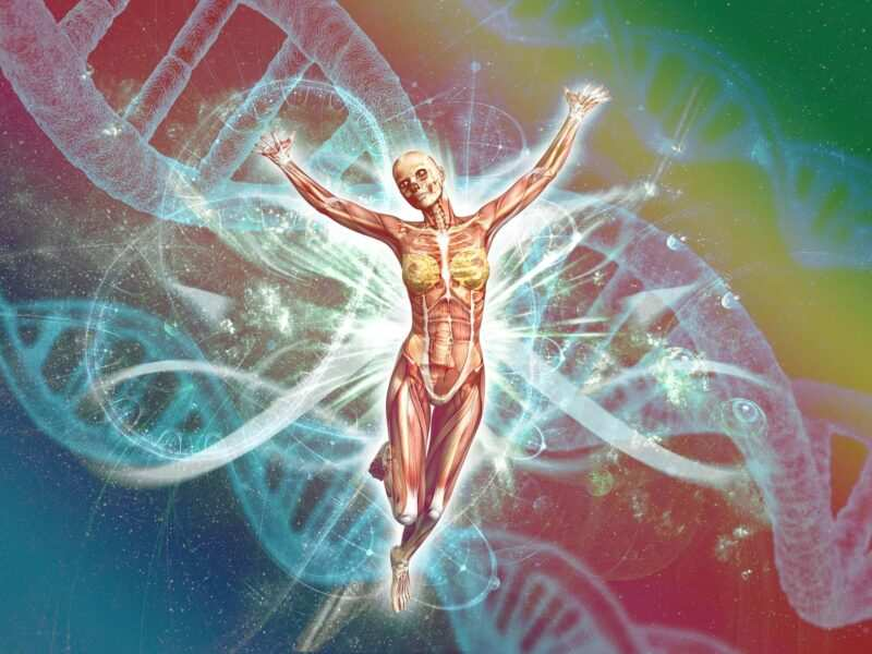 curiosita sul corpo umano 800x600 - Curiosità sul corpo umano
