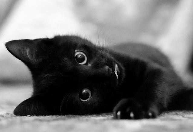 Nomi per gatti neri 1 - Nomi per gatti maschi e femmine neri