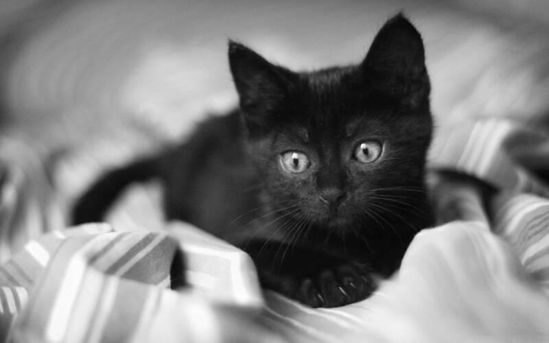 Nomi per gatti neri 2 800x500 - Nomi per gatti maschi e femmine neri