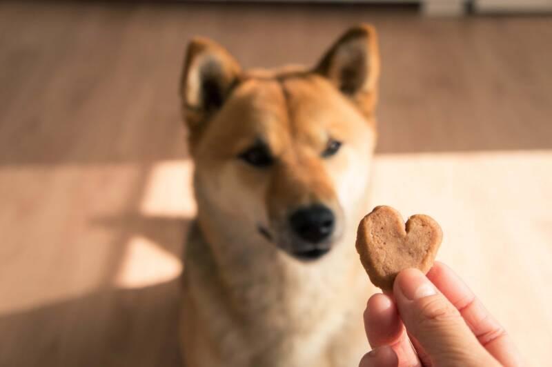 biscotti per cani la ricetta 800x532 - Biscotti per cani, 3 ricette facili e salutari per il tuo amico a 4 zampe