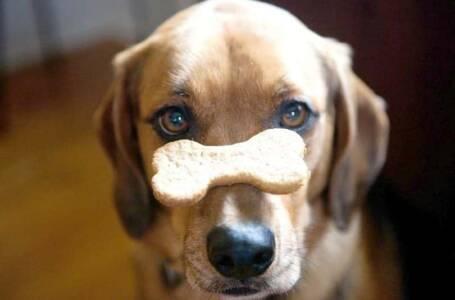 ricette di biscotti per cani