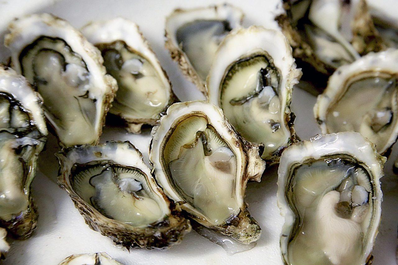 ostriche fresche frutti di mare scaled - Ricette con cozze e vongole? Regole per mangiarle in sicurezza