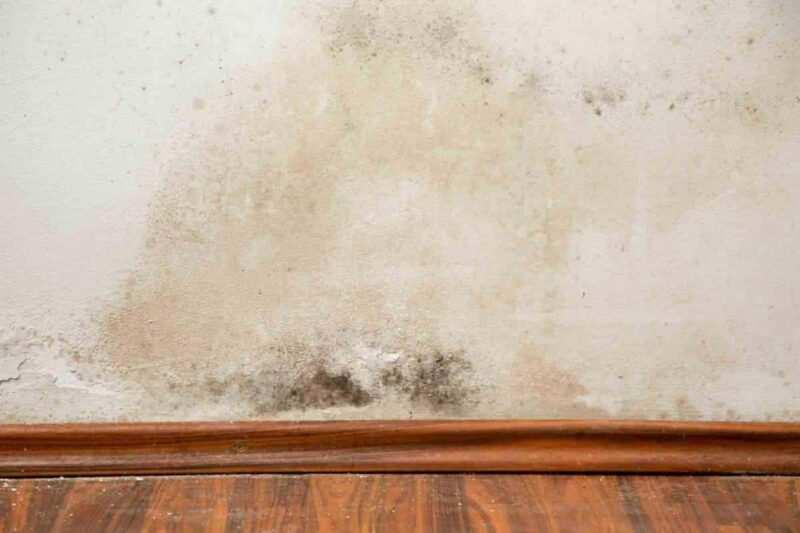 muffa sui muri e umidita in casa da dove arrivano e come eliminarla 800x533 - Muffa sul muro e umidità in casa, da dove arrivano e come eliminarla