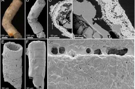 il fossile vegetale più antico del mondo