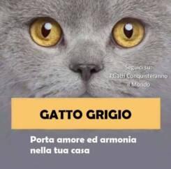 gatto grigio 245x242 - I colori dei gatti, il loro carattere e cosa dicono su di te