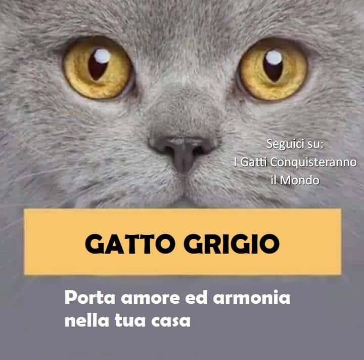 gatto grigio - I colori dei gatti, il loro carattere e cosa dicono su di te