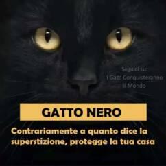 gatto nero 242x242 - I colori dei gatti, il loro carattere e cosa dicono su di te