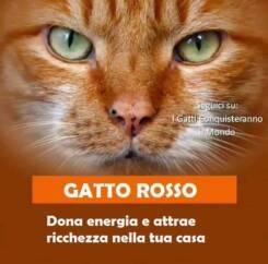 gatto rosso 245x242 - I colori dei gatti, il loro carattere e cosa dicono su di te