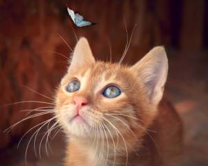 gattino rosso con farfalla