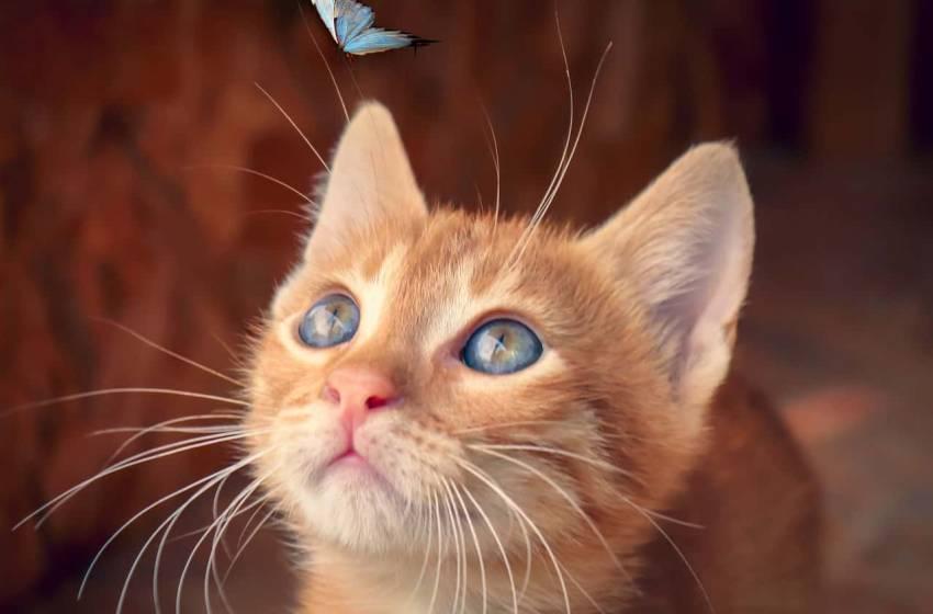 I colori dei gatti, il loro carattere e cosa dicono su di te
