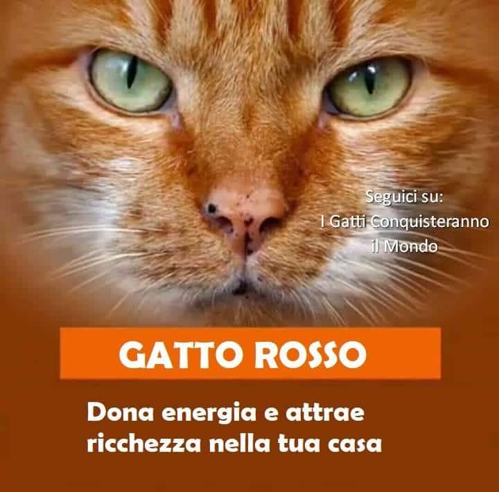 gatto rosso - I colori dei gatti, il loro carattere e cosa dicono su di te