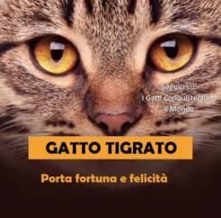 gatto tigrato 246x242 - I colori dei gatti, il loro carattere e cosa dicono su di te