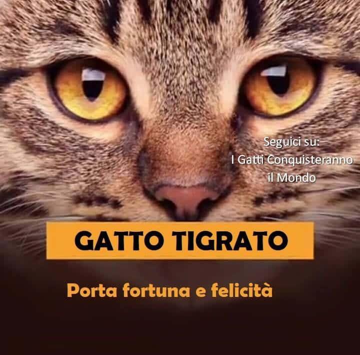 gatto tigrato - I colori dei gatti, il loro carattere e cosa dicono su di te