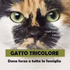 gatto tricolore 245x242 - I colori dei gatti, il loro carattere e cosa dicono su di te