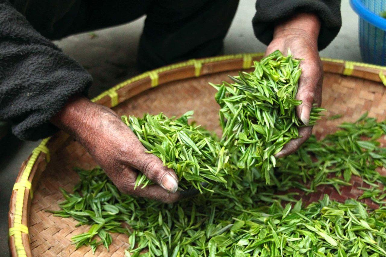 Tè verde scaled - Tè verde  la bevanda più bevuta dai giapponesi