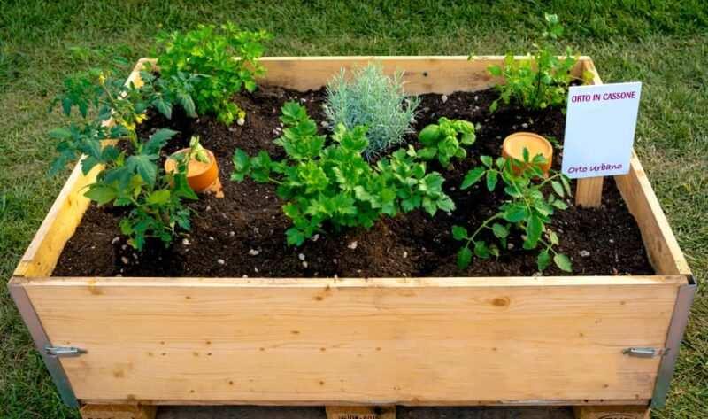 mini orto in terrazzo 800x473 - Creare un piccolo Orto in un terrazzo e quali ortaggi coltivare in quarantena Covid-19