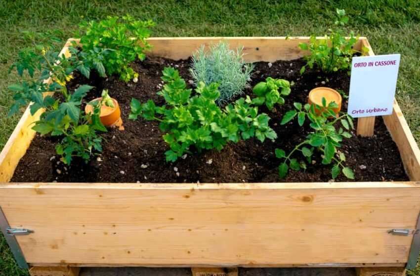 Creare un piccolo Orto in un terrazzo e quali ortaggi a coltivare in quarantena Covid-19