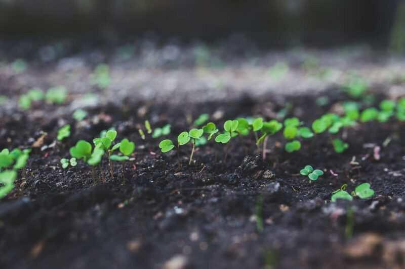 rucola 800x533 - Creare un piccolo Orto in un terrazzo e quali ortaggi coltivare in quarantena Covid-19