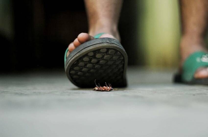 Fobia delle blatte e sognare blatte: analisi e significato