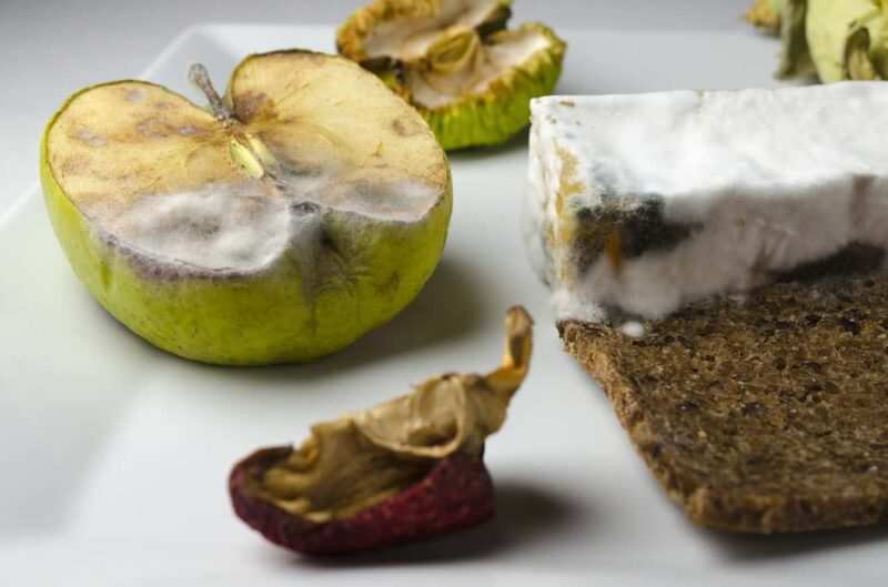 cibo muffa 800x529 - Limoni ammuffiti un dessert rivoluzionario: orrori da gustare