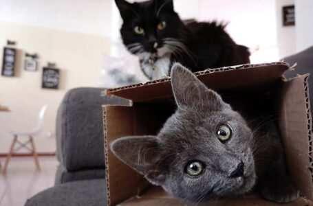 scatola per creare giochi per gatti