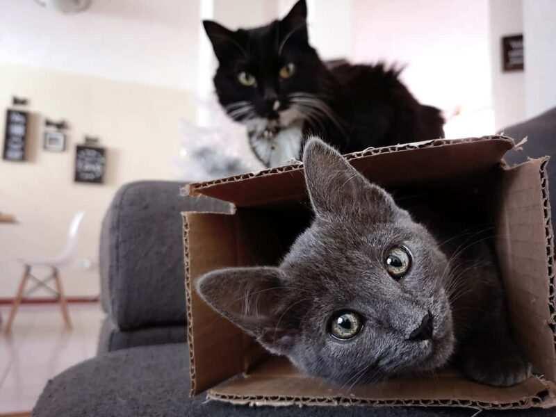 creare giochi per gatti 4 800x600 - Nomi per gatti in tedesco e in francese