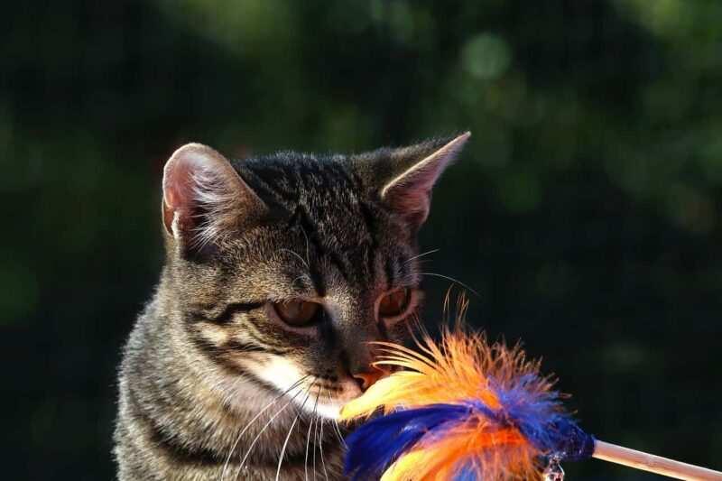 creare giochi per gatti 800x533 - Come creare giochi per gatti fai da te, con materiale riciclato
