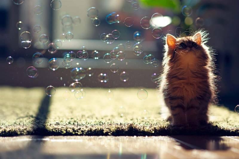 gatto gioca bolle di sapone 800x533 - Come creare giochi per gatti fai da te, con materiale riciclato