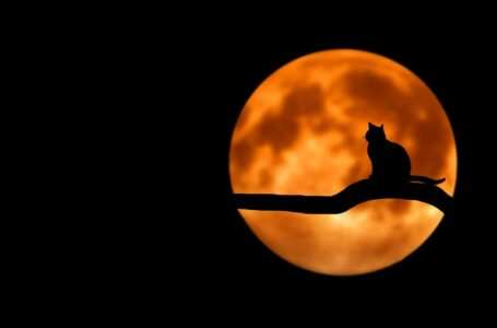 Gatto luna