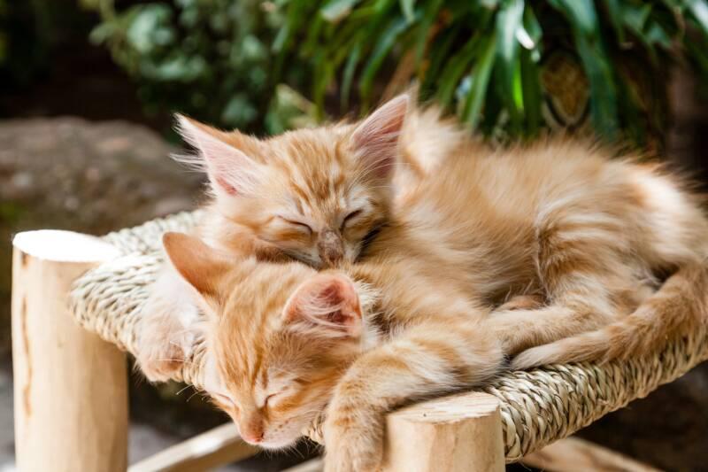 Nomi per gatti 800x533 - Nomi per gatti rari, particolari, russi e coppie